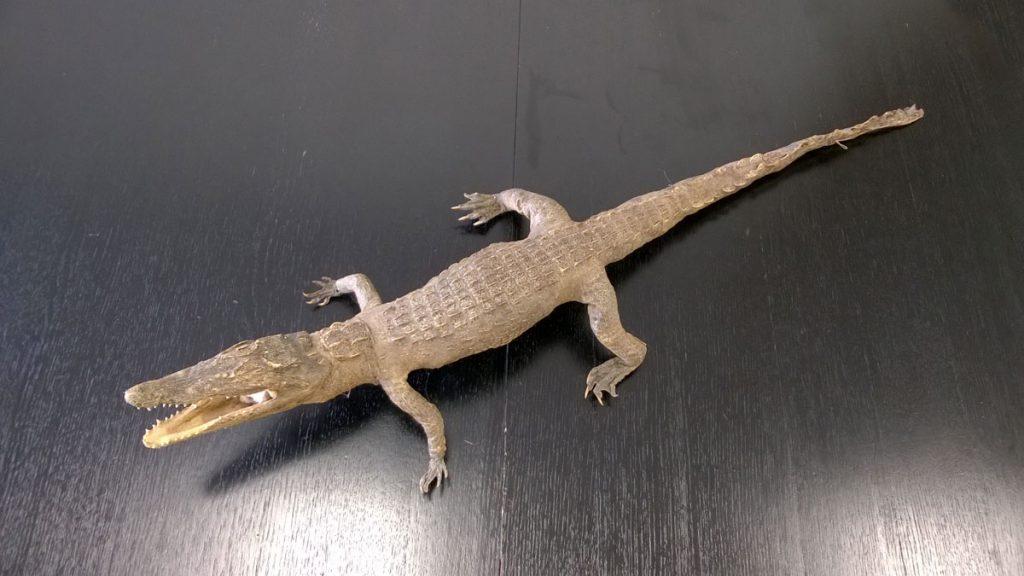 boligtilbehoer udstoppet krokodille fin stand