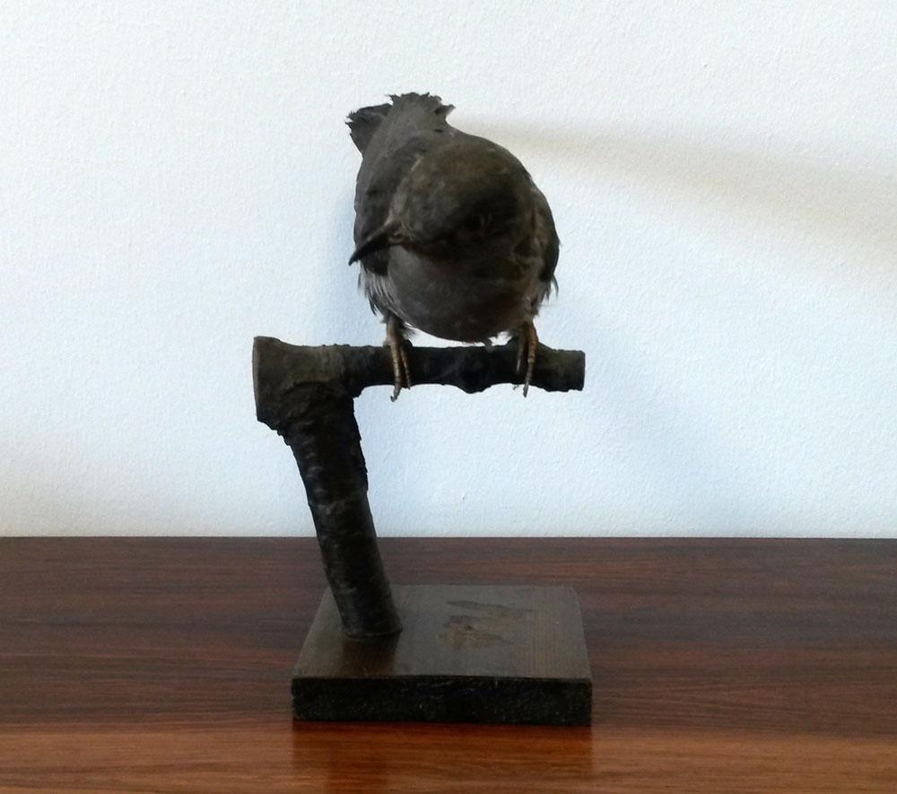 dekohjem boligtilbehoer udstoppet fugl rigtig fin sidder paa en pind
