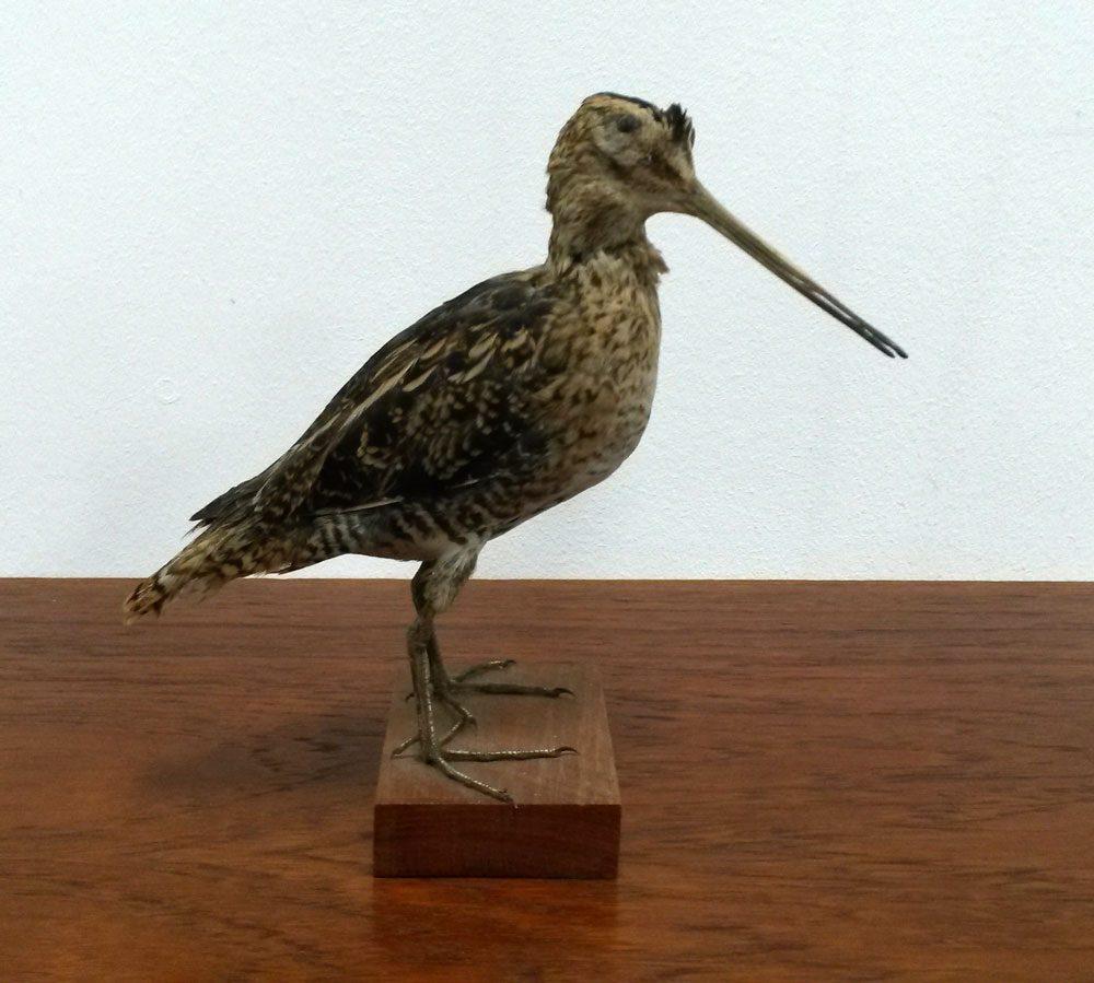 dekomoebler boligtilbehoer fin lille udstoppet fugl i god stand