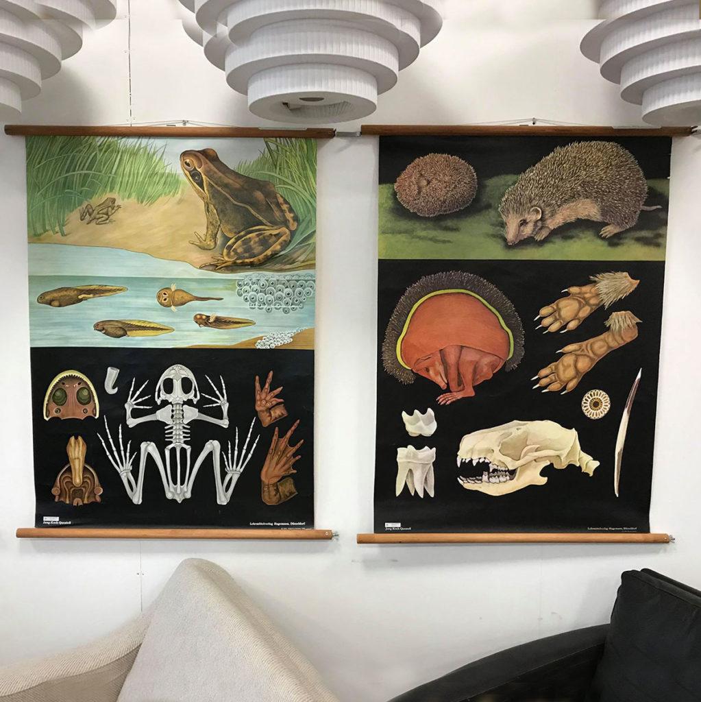 dekohjem flotte plancher fra biologilokalet